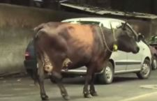 India: linciato dalla folla perché sospettato di mangiare carne di mucca