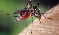 Roma: sospese le donazioni di sangue per la Chikungunya