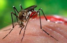 Il virus Zika per combattere il cancro del cervello?
