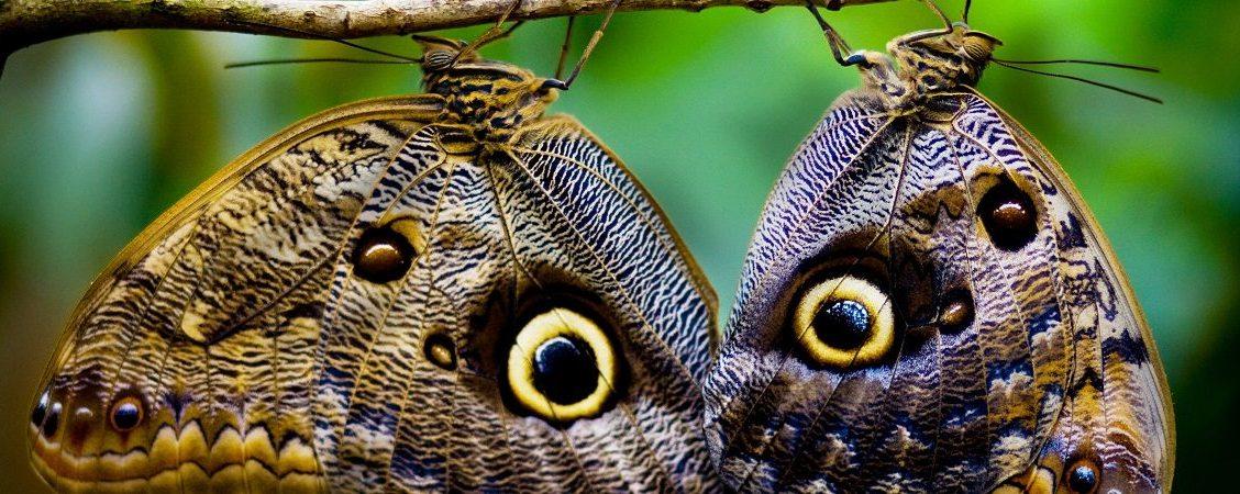 Ciclo Di Vita Della Farfalla Feltro Set