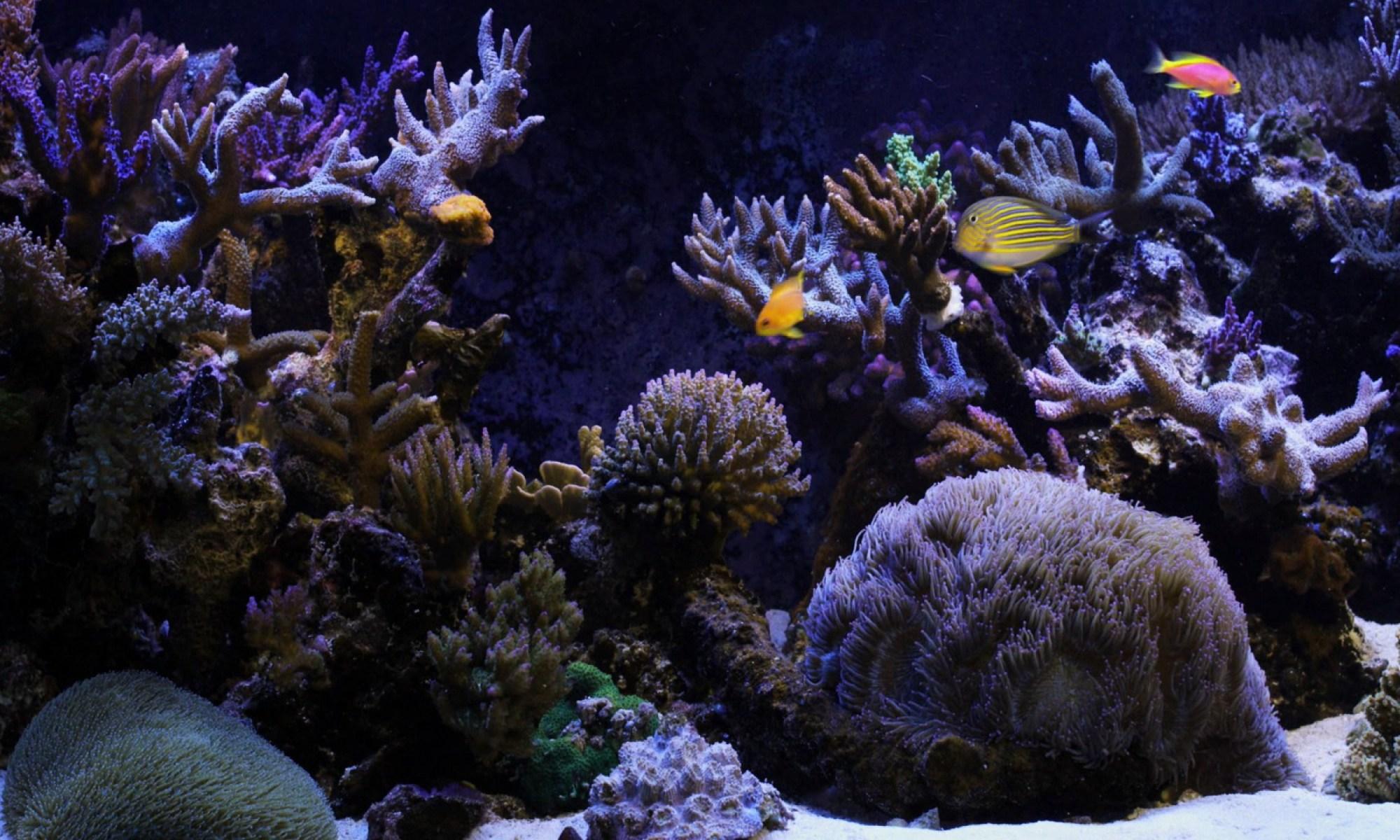 Ultimate Aquarium Caboolture