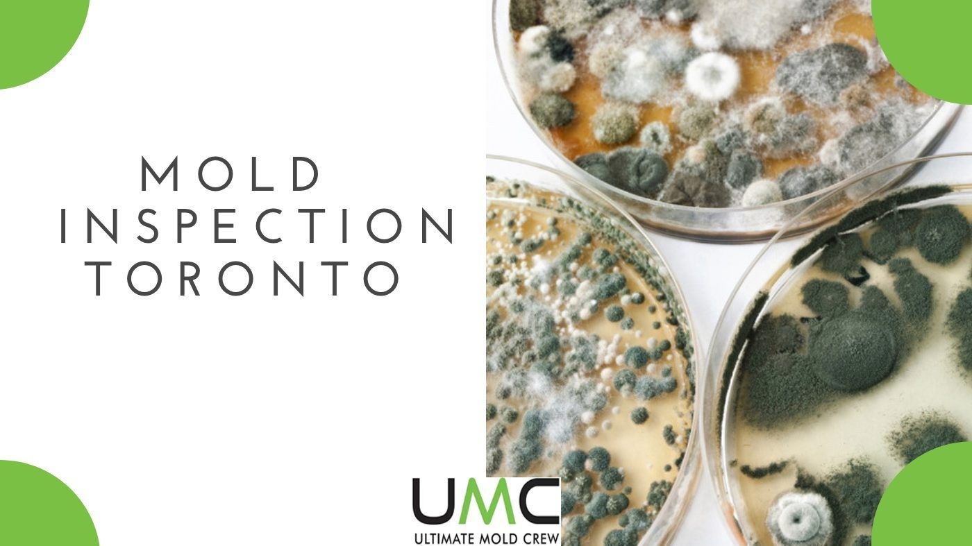 Mold Inspection & Testing Guide Toronto.
