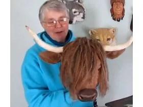 highland cow tn