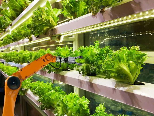 L'agriculture verticale et automatisée prend racine dans les centres-villes