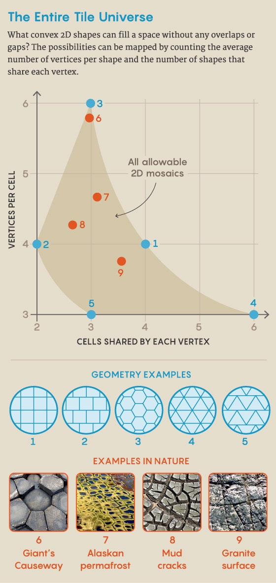 a graphic and infographic showing geometric examples in nature