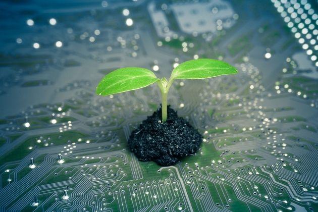 Ecologie : la Royal Society britannique appelle les géants du numérique à faire plus