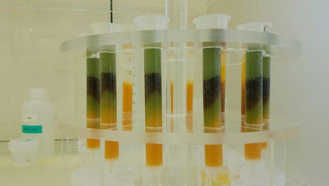tungsten in test tubes