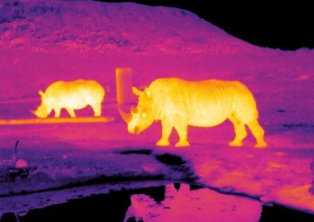 Les caméras thermiques, solutions face à l'augmentation des collisions avec les animaux ?