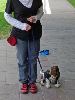 Good leash tension