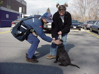 Young woman and her 12-week-old chocolate Lab puppy meet a mailman. They meet outdoors and the puppy is in a sit while the mailman leans over and rubs his ears. The woman gives the puppy a treat as this happens