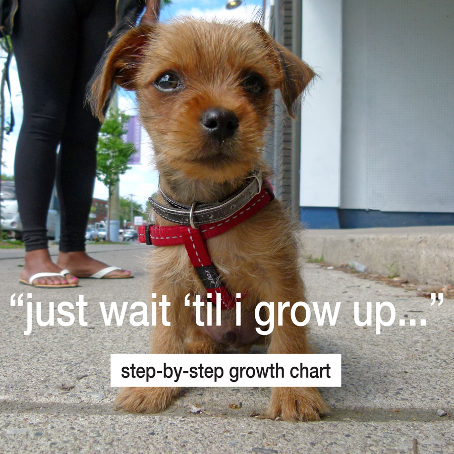 Puppy Development Chart