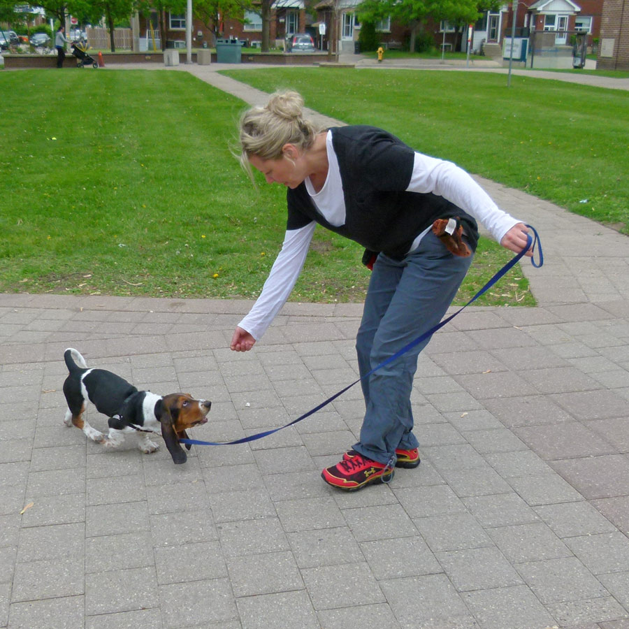 Woman gives puppy treats for check in with her