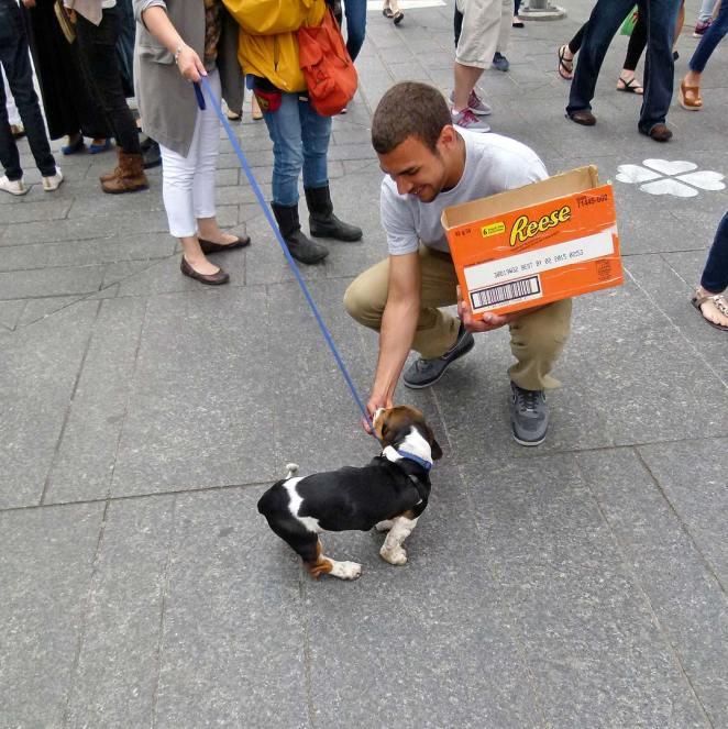 puppy_field_trip_09