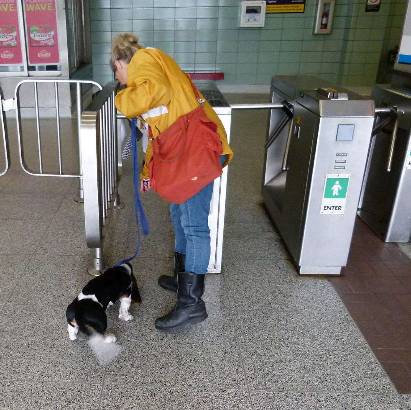 Puppy encounters turnstile in the subway station