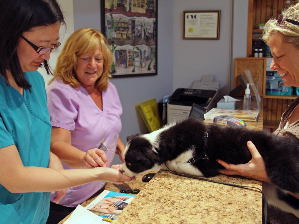 Clinic staff offer puppy a treat creating a positive association