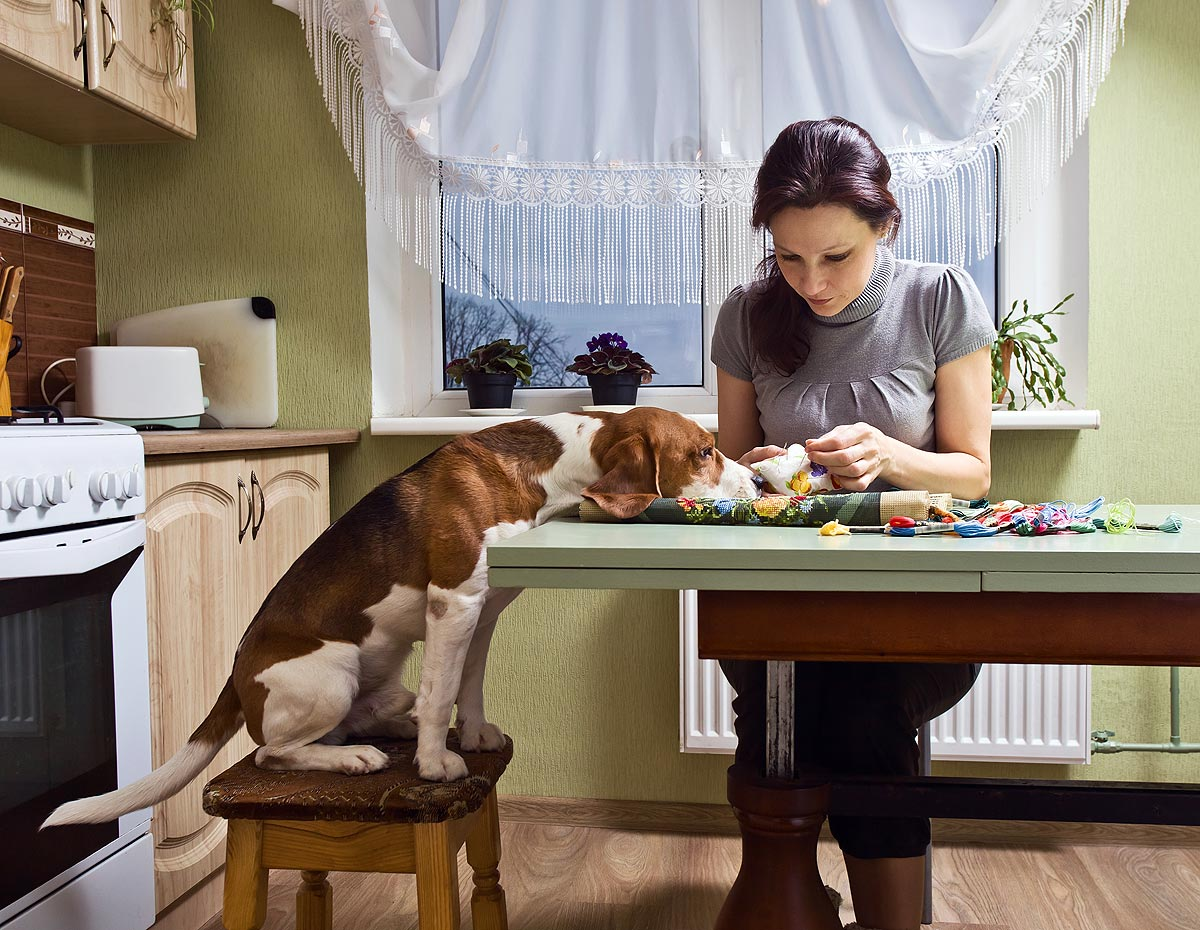 A young woman sits at a table doing needlepoint while a beagle sits next to her on a chair with his head resting on the table while watching her work.