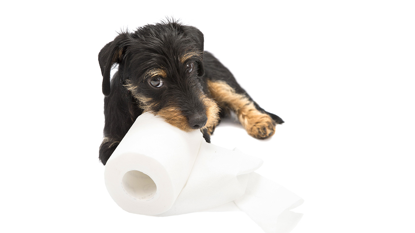 House Training Archives - Ultimate Puppy