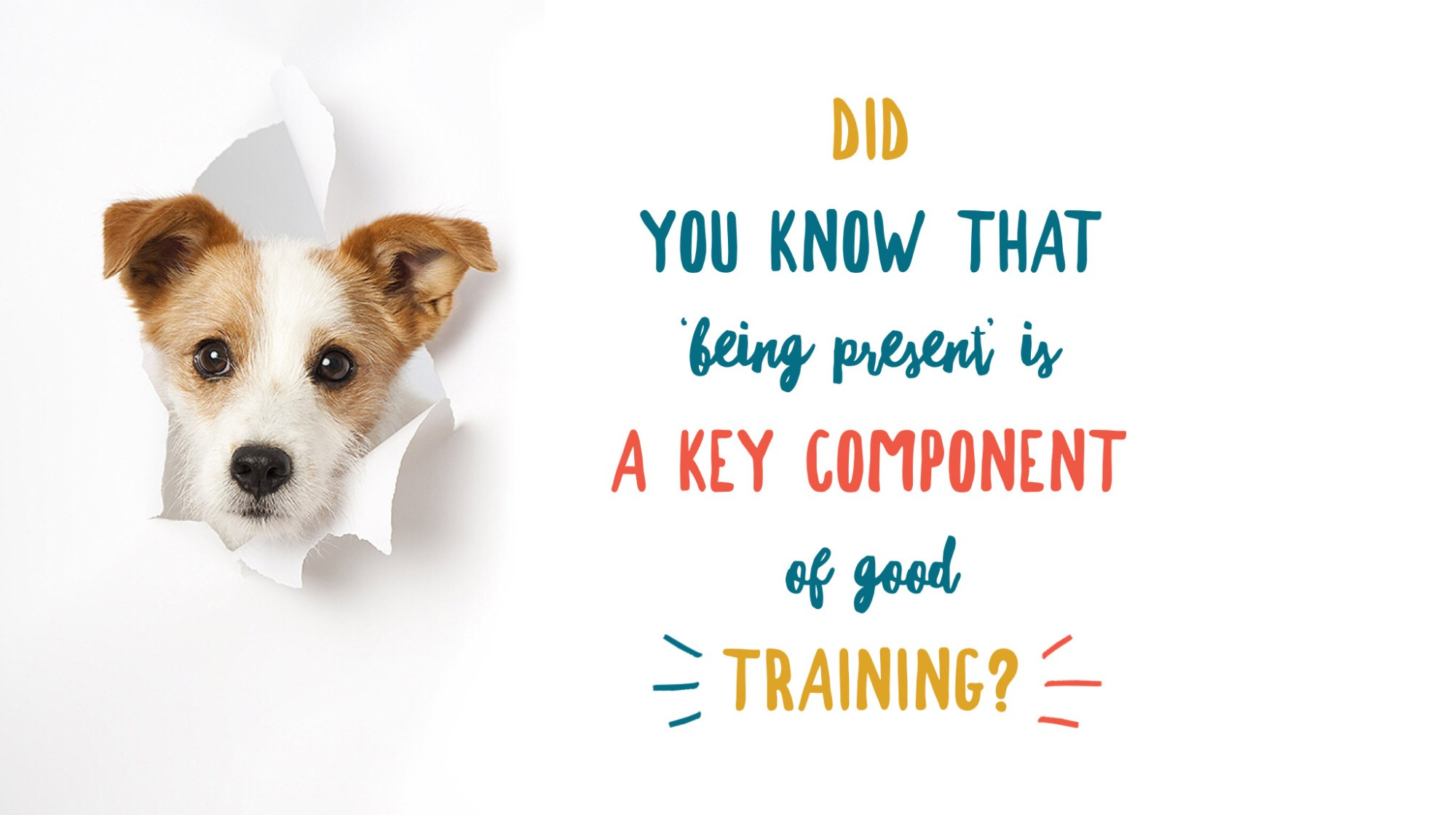 A young jack russell puppy's head has burst through the white paper on the left of the page. He is facing the camera. On the left is text which reads: Did you know that being present is a key component of good training?