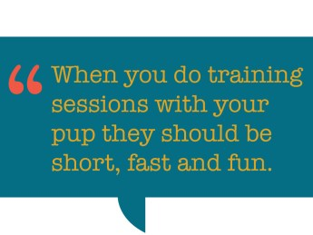 pull quote: When you do training sessions with your pup they should be short, fast and fun.