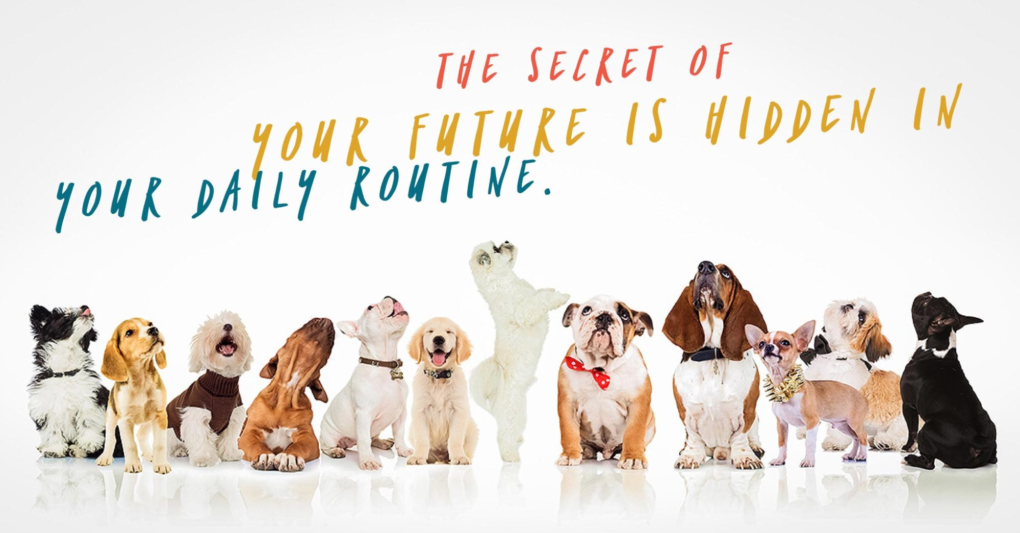 "puppies looking up at words that say ""the secret of your future is hidden in your daily routine"""