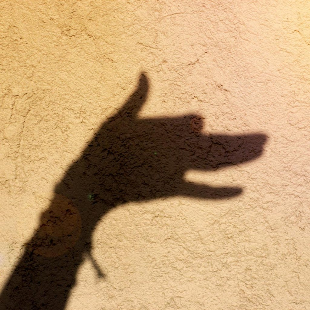 a hand shadow of a dog