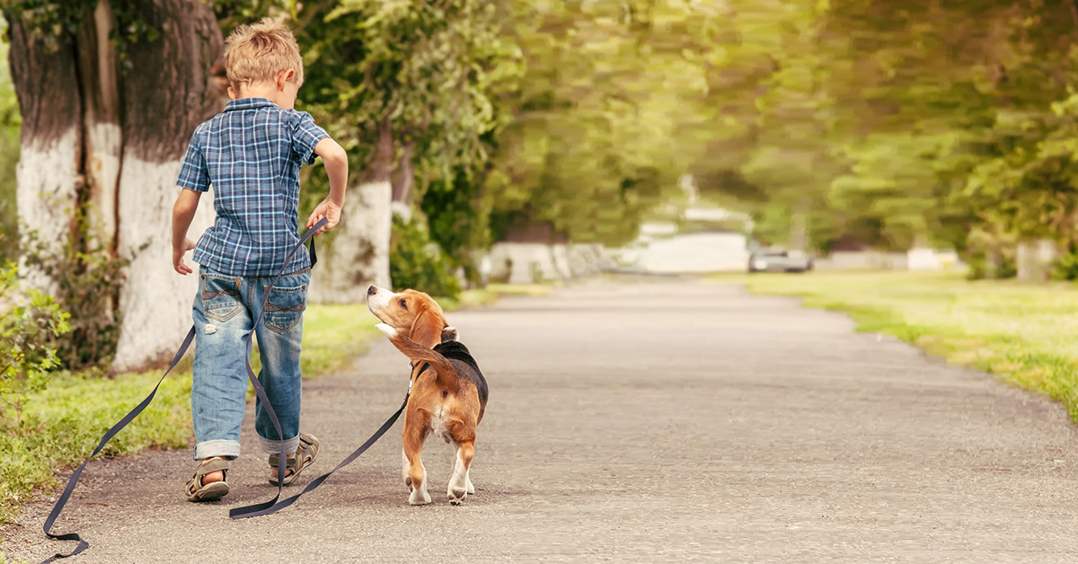 a small boy and his dog are walking away from the camera. The dog is on a line line and he is looking up at the boy.