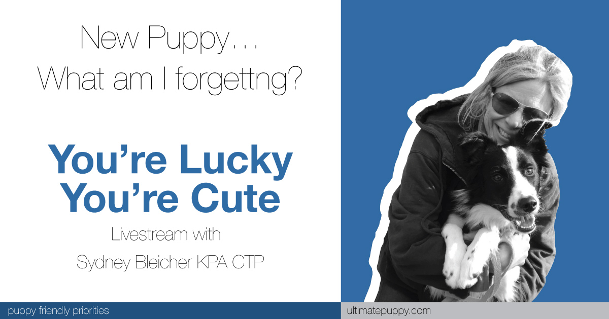 livestream banner for You're Lucky You're Cute. new puppy… what am i forgetting?