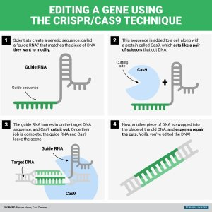 CRISPR staminali