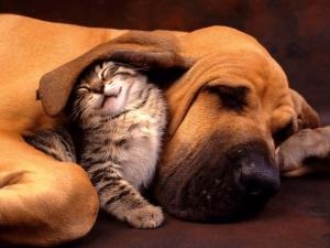 Litigare come cani e gatti : coppia