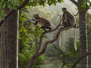 Antichi fossili di scimmia: 2 (Credits: Mauricio Antón)