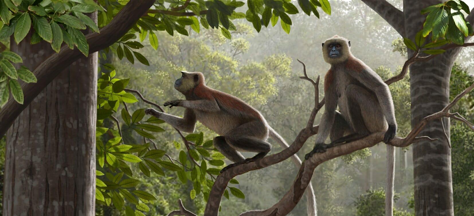 Antichi fossili di scimmia: 1