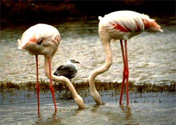 Lago_Nakuru