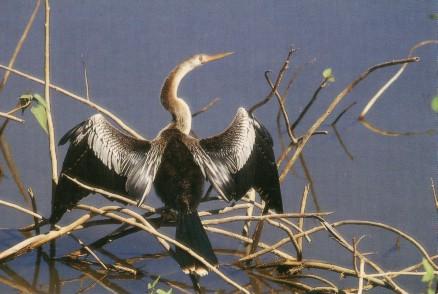 pantanal_2