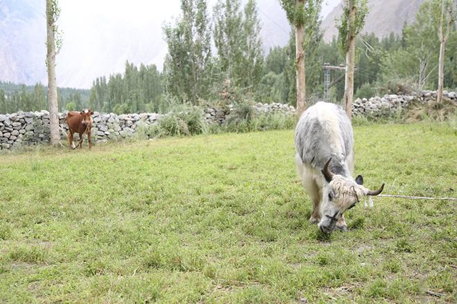 hunza valley pics 2