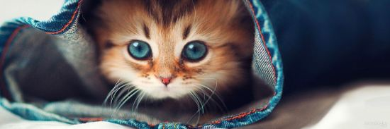 hidden-kittens-twitter-header