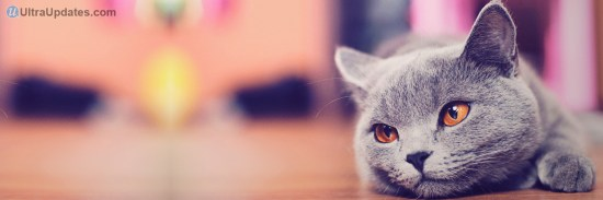 sad-cat-twitter-header