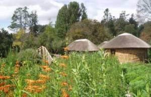 The medicinal garden at KwaNdlovu