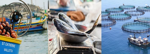 Image result for fisheries and aqua culture course