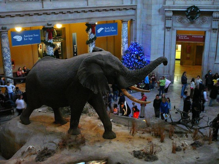 henry-the-elephant-and-christmas-tree-at-museum-of-natural-history_credit-f-delventhal-flickr