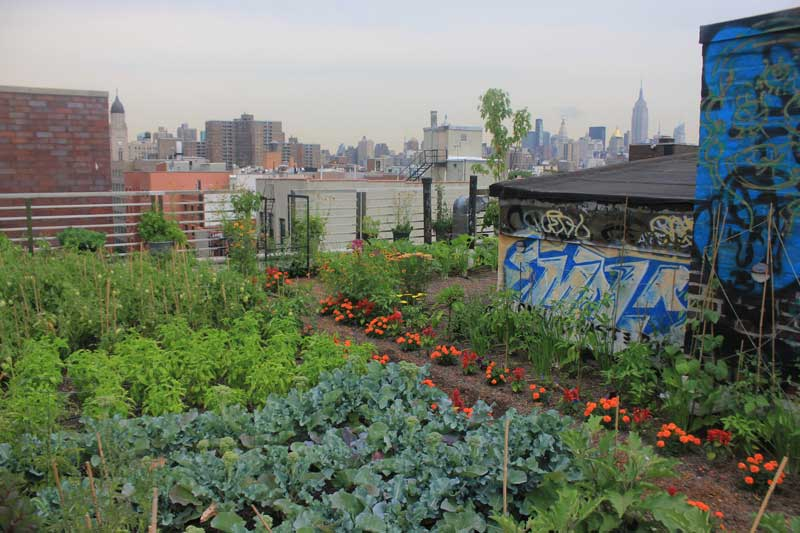 Image result for umbrella house roof garden