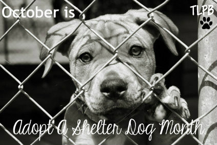 Image result for national adopt a shelter dog month