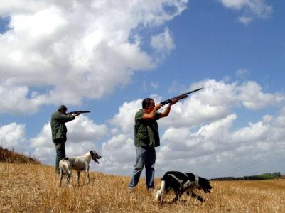 caccia in calabria munizioni al piombo bracconaggio
