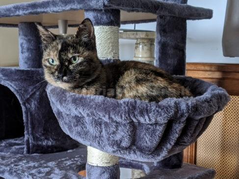 pet mostra gatto sportello a 4 zampe
