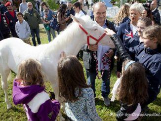La storia della Cavallina albina di Assisi, Via Lattea e La scuderia dei miracoli