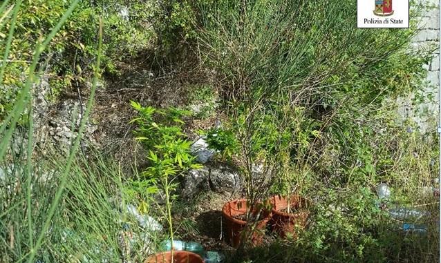 Arrestato ad Assisi un giovane produttore di marijuana