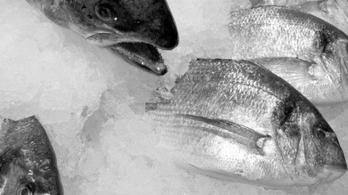 Cibo avariato, oltre 800 chili di carne e pesce surgelati bloccati dai forestali