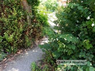 Erbe e piante imprigionano Pieve di Campo a Ponte San Giovanni