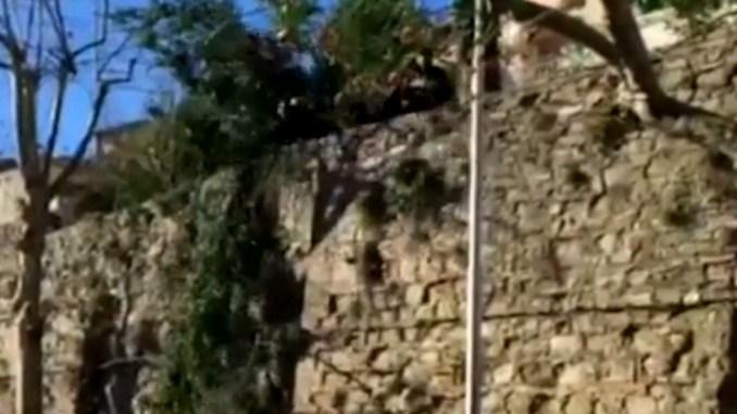 Cade ramo in via XIV Settembre a Perugia, automobilista salvo per miracolo