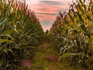 Agricoltori in difficoltà, erogazioni in agricoltura, Prisco, decentrare Agea