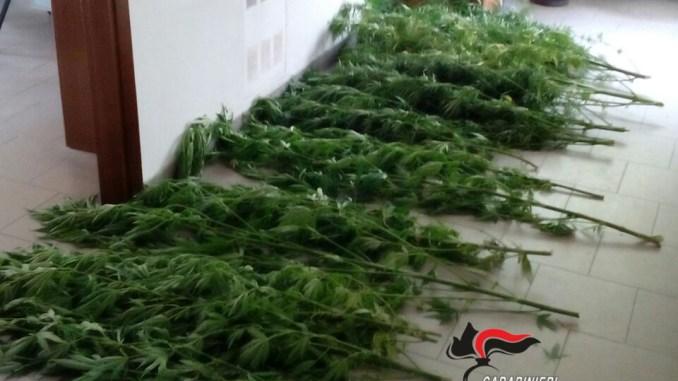 Coltiva la marijuana in giardino, 60enne denunciato a Montecastrilli